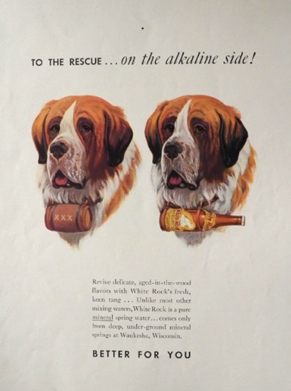 1937 White Rock Water Ad ~ St. Bernard Dog