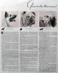 1934 Choosing The Right Dog ~ Morgan Dennis Print & Article
