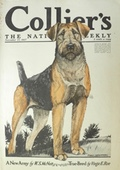 1917 Collier's Magazine Cover ~ Airedale Terrier ~ Charles Livingston Bull
