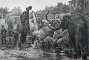 1886 Bathing Elephants in Central Park Antique Print & Article