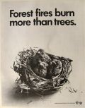 1971 Vintage Forest Fires Ad ~ Baby Birds in Nest