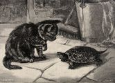 1891 Cat & Turtle Antique Print Engraving