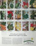 1957 Hammermill Papers Ad ~ Tree Identification