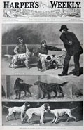 1886 Setters & Pointers at Dog Show ~ Antique Print ~ Harper's Weekly
